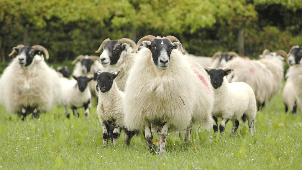 Defra postpones requirements for additional livestock record keeping