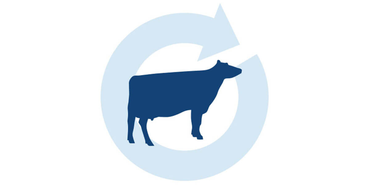 Transition Cow Checklist: Enhanced Management and Dairy Cattle Nutrition Strategies