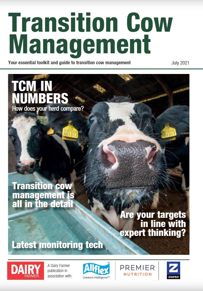 Transition Cow Management Toolkit 2021