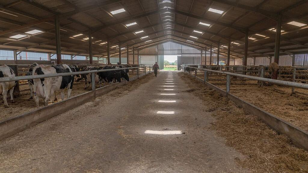 The new dry cow facility provides a relaxed environment.