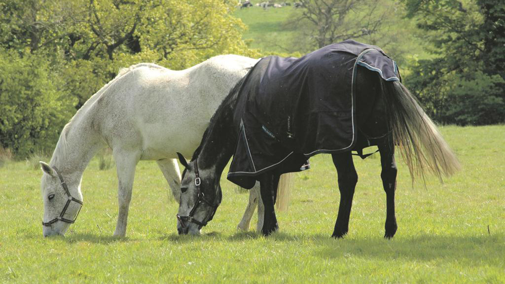 Hay or haylage – what is the best option for your horse?