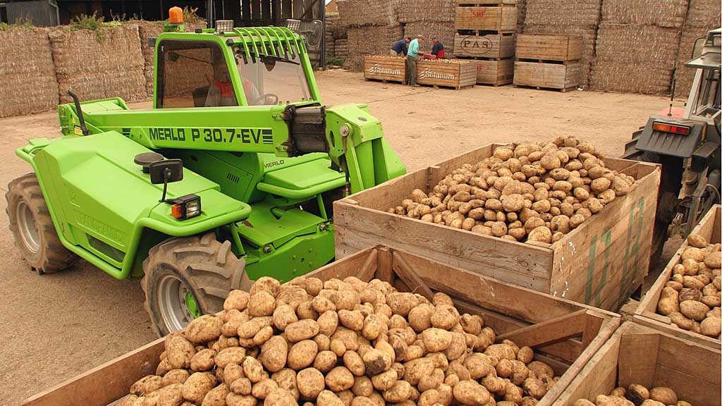 Big potato yields prompt storage concerns