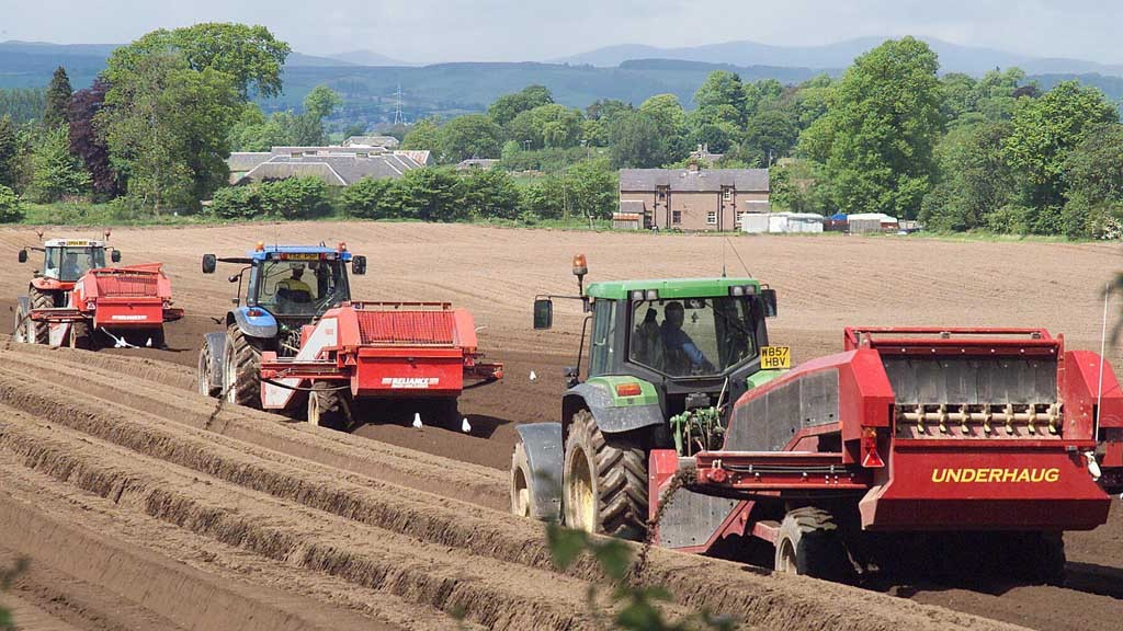 Price rise set to boost potato plantings