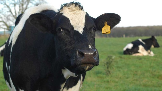 Milk price increases provide optimism for dairy industry