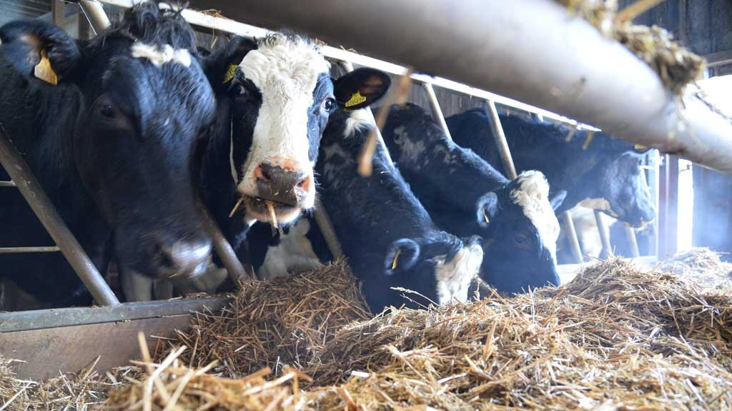 Exporting dairy could help reduce volatility
