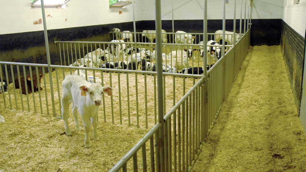 Live export ban? Government expected to bring forward new Animal Welfare Bill