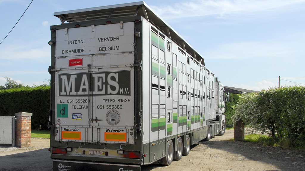 Plans to ditch live exports set to hit farmers hard