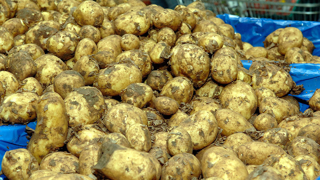 Waste potatoes transformed into beauty creams