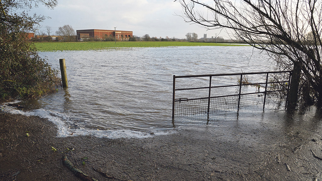 Looters steal from flooded Somerset Levels farm
