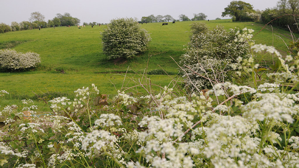 Greening reaction: NFU welcomes 'pragmatic' decision