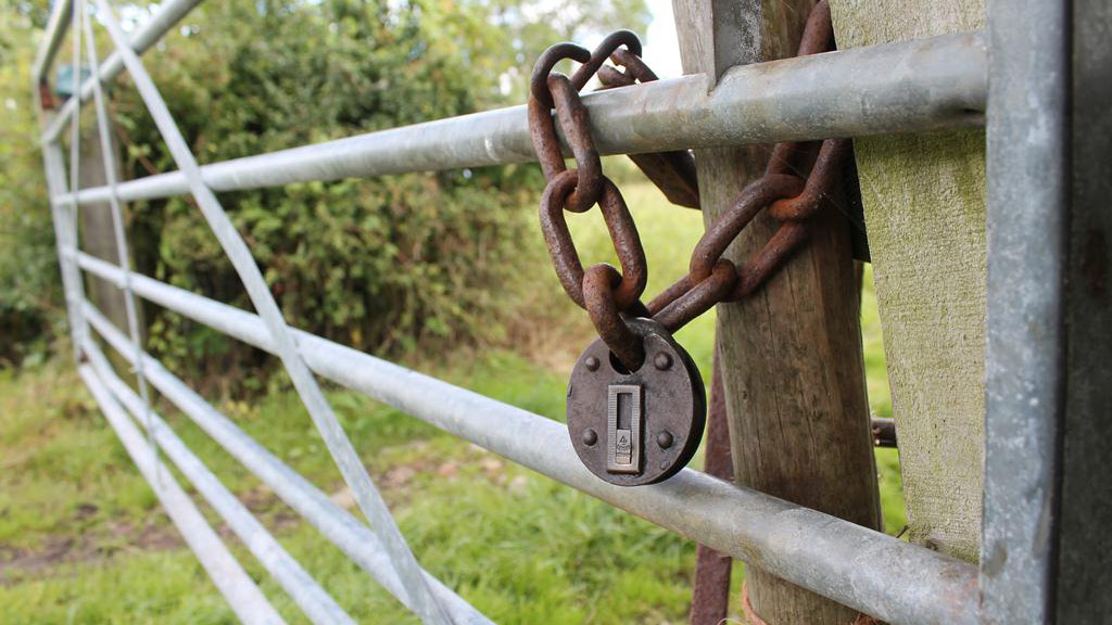 Cows escape after thieves botch farm gate theft