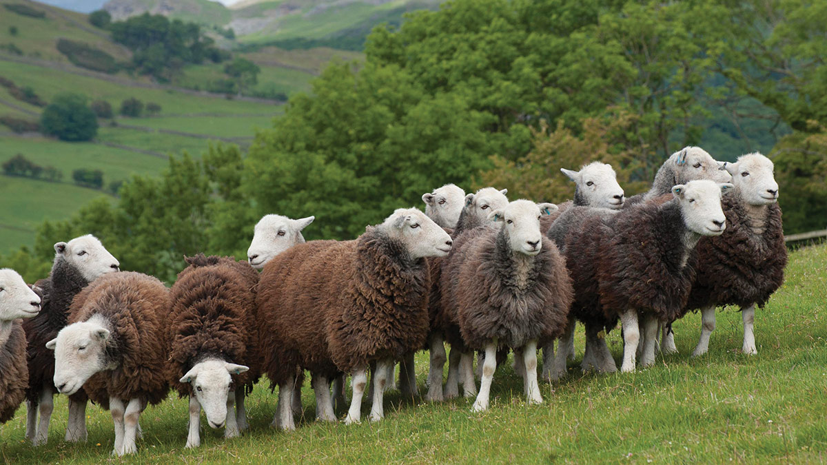 Lake District farmers forced to defend newly appointed World Heritage status