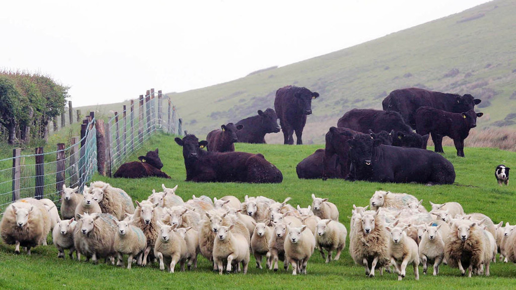 Profit from livestock and grassland management