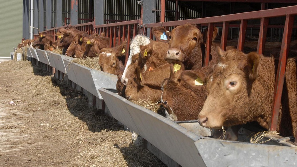 Price volatility and reduced stocks weighing on feed market