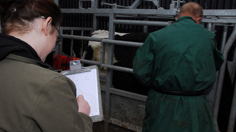 Disagreement over Welsh TB eradication progress