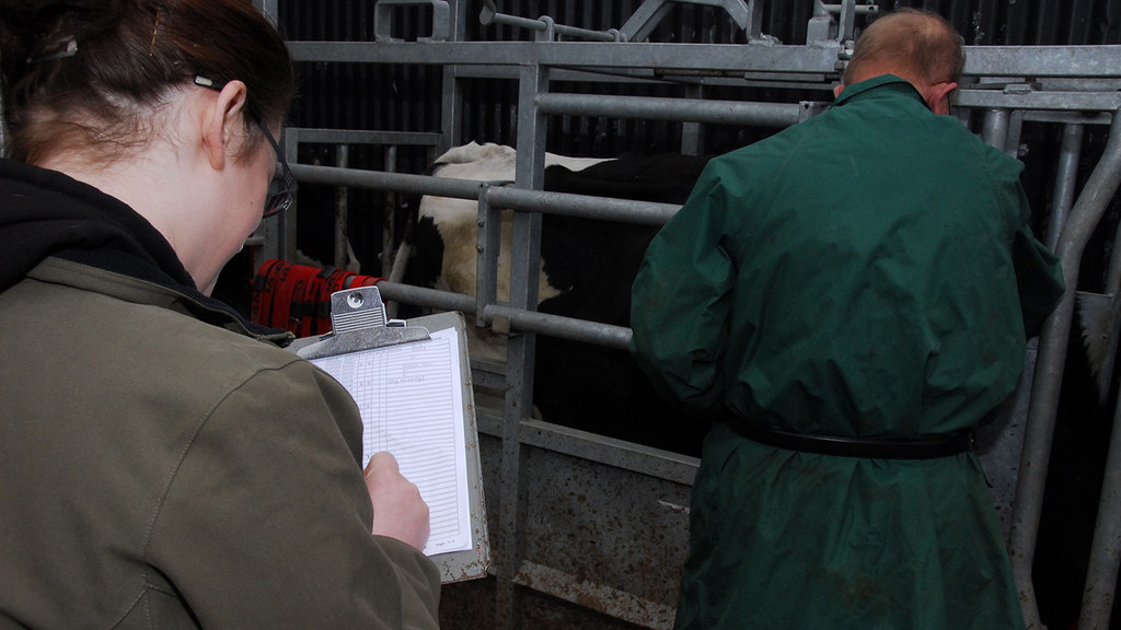 Defra to pilot use of non-vets for bovine TB testing on UK farms