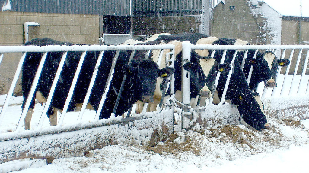 Experts warn dairy farmers about winter energy crisis