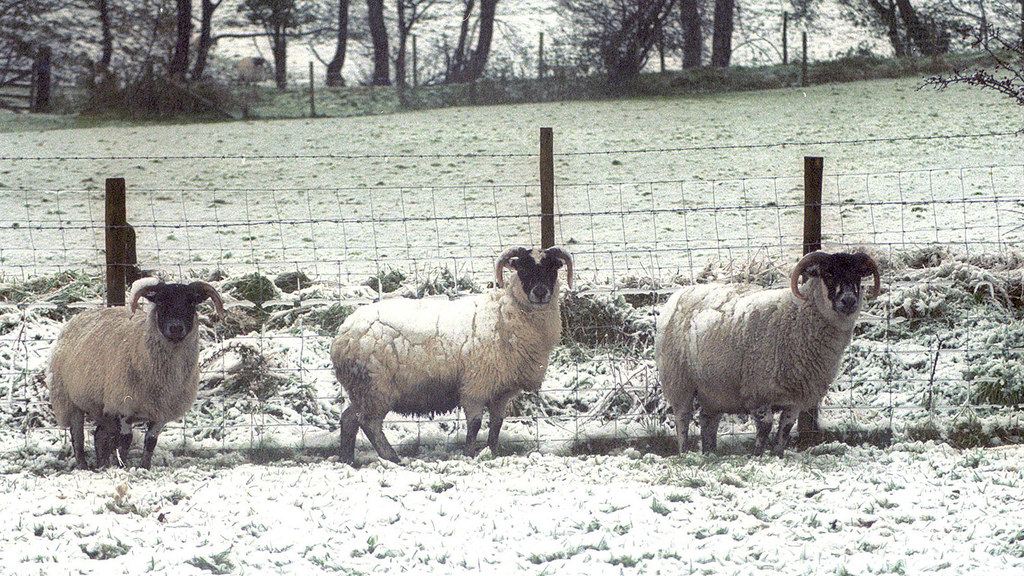 Farm charities offer help as farmers fight appalling weather