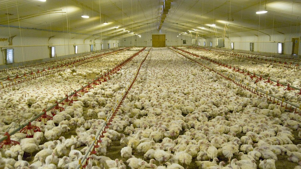 New non-statutory welfare guidelines for poultry will be published in April