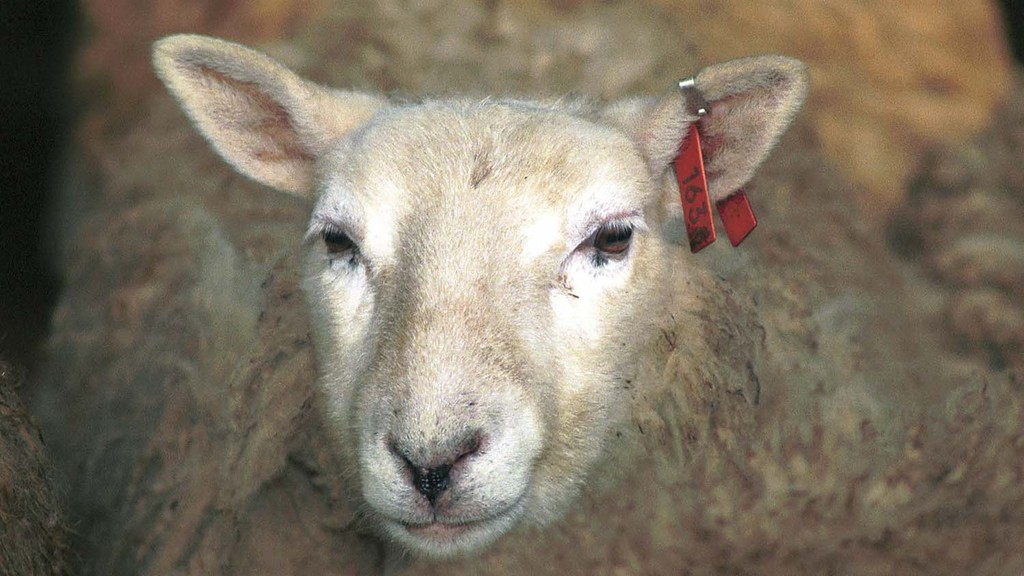 Sheep meat exports must not be affected in post-Brexit Britain - NFU Cymru