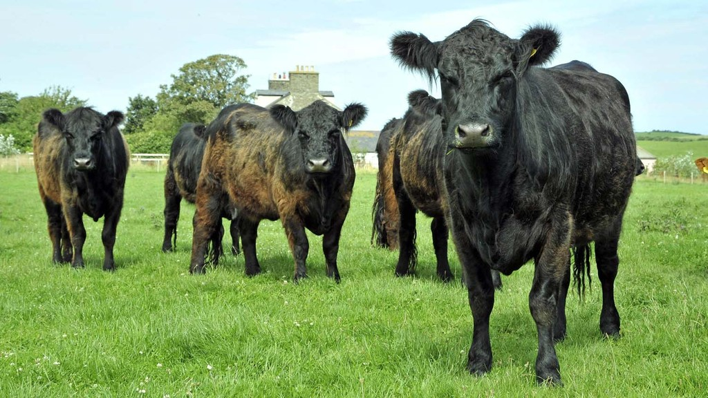 New report highlights progress in tackling udder health, BVD and Johne's