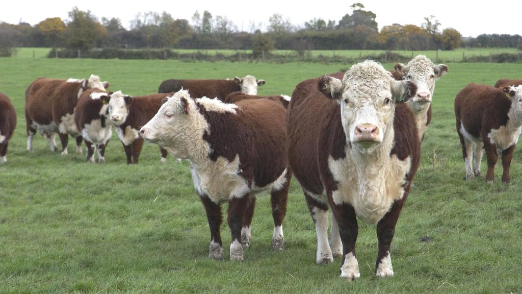 APHA backs down on TB AFU grazing rules after legal challenge