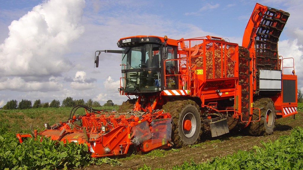 Beet yields high but sugar low