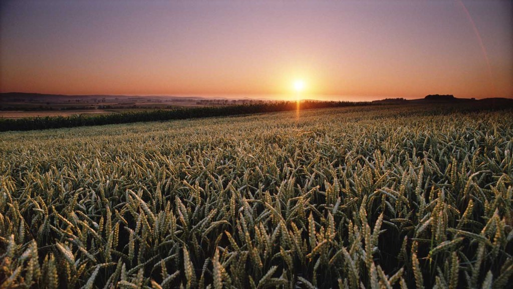 Innovative farm research plan launched at the Oxford Farming Conference