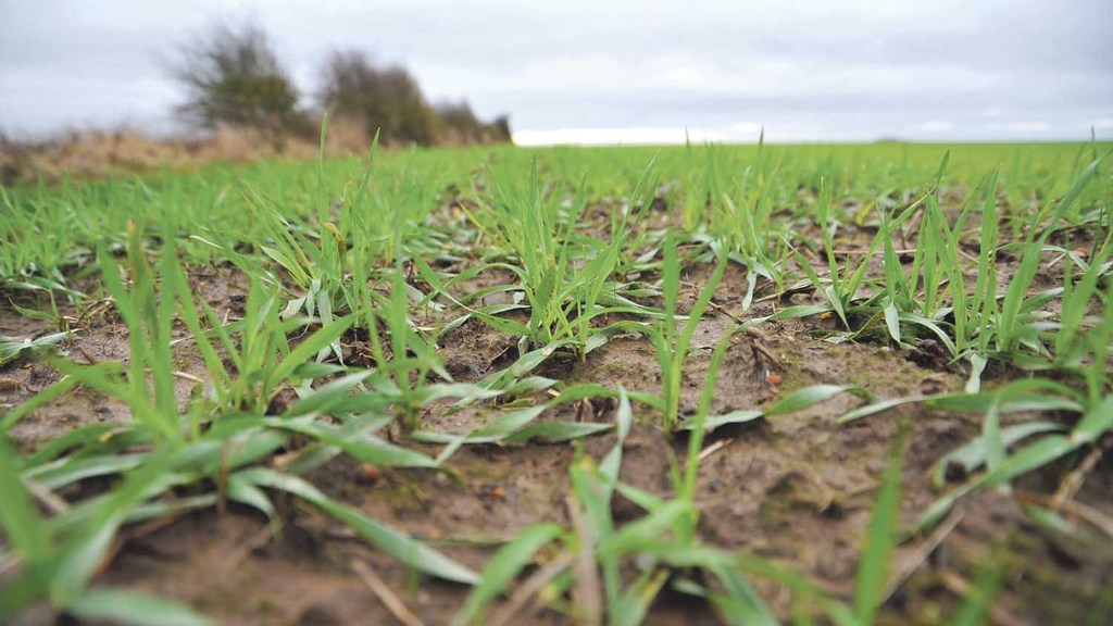 Agronomy, crops and soil