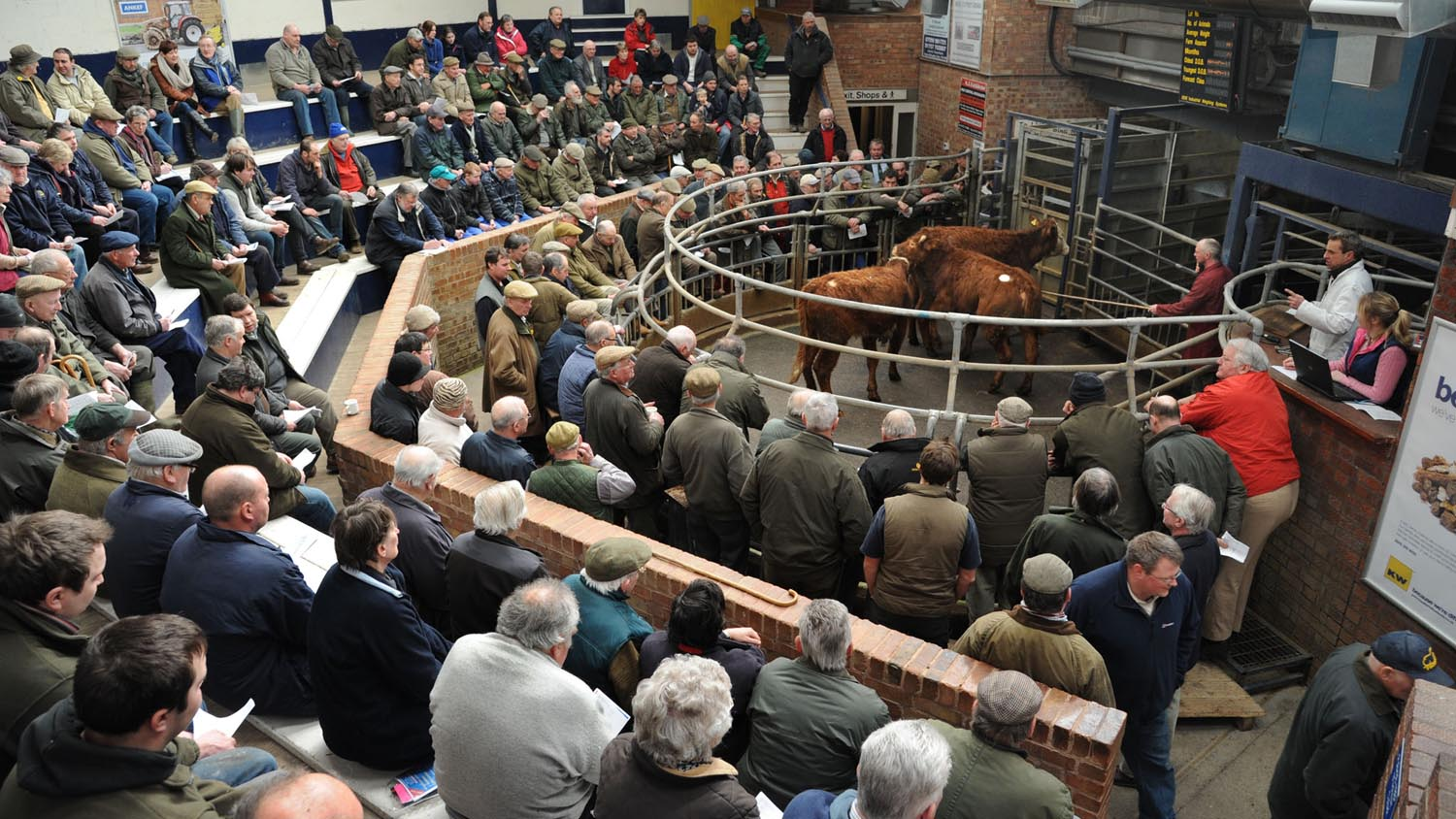 Beef processor movement limit prompts frustration at marts