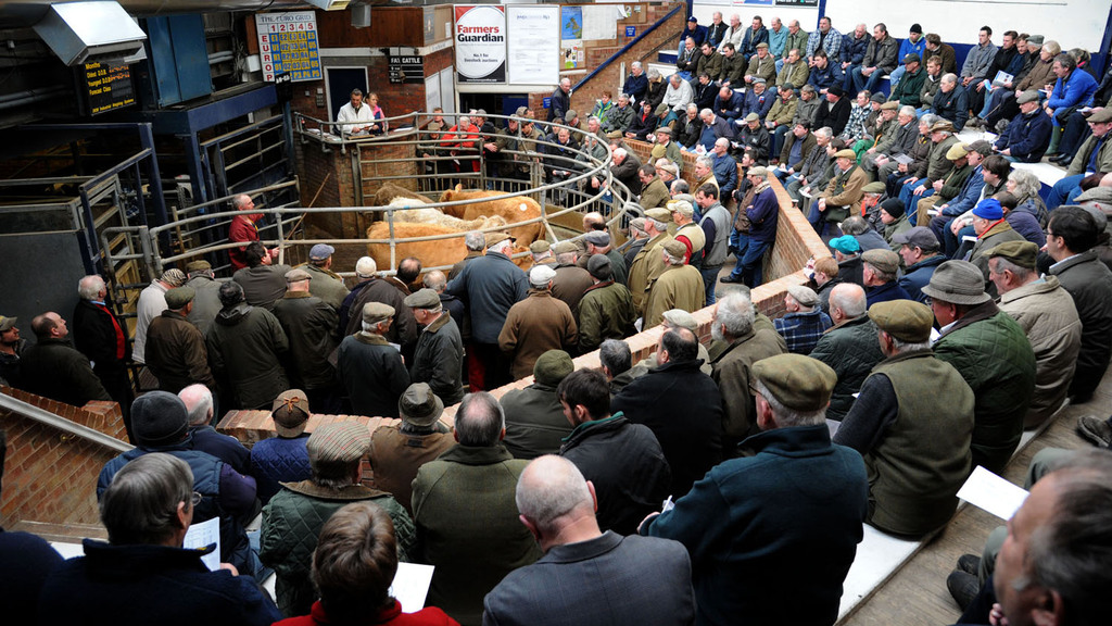 Beef Expo 2015: A packed schedule at york auction centre