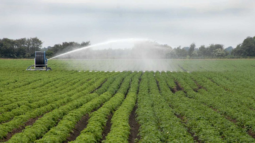 Optimising irrigation for potato scab control