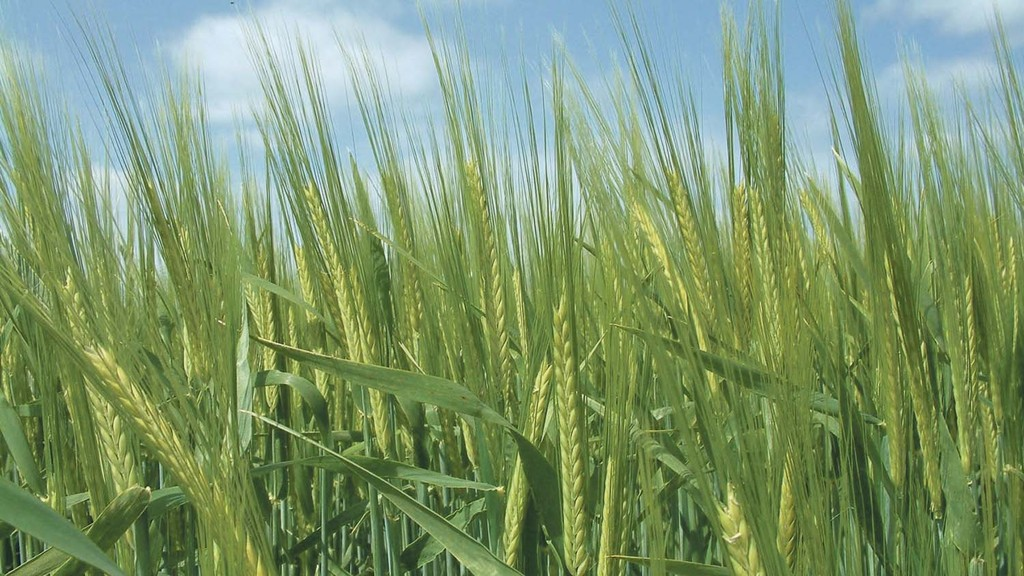 Consider markets and plan agronomy when making spring barley variety choices