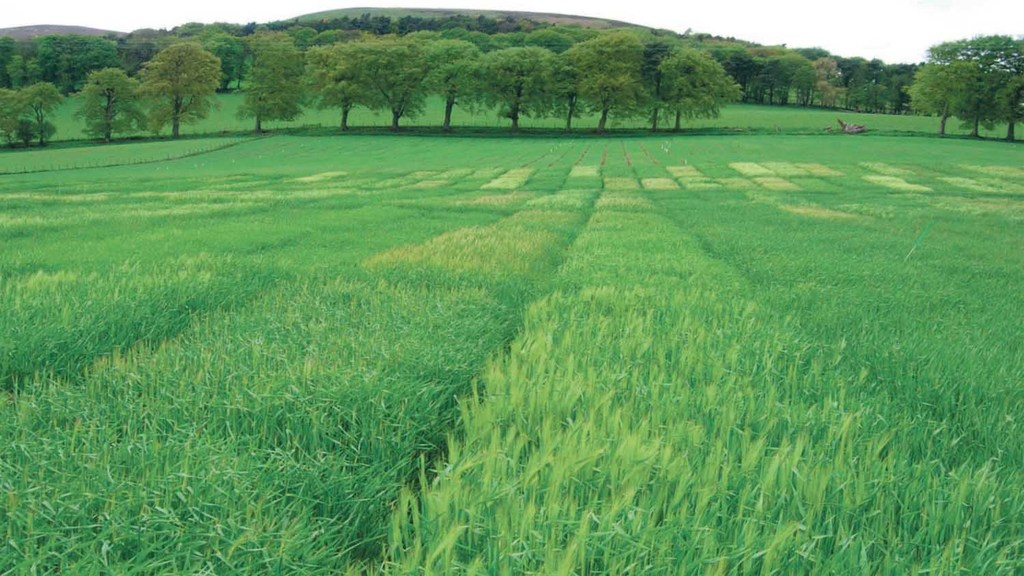 Nitrogen sampling boosts barley yields