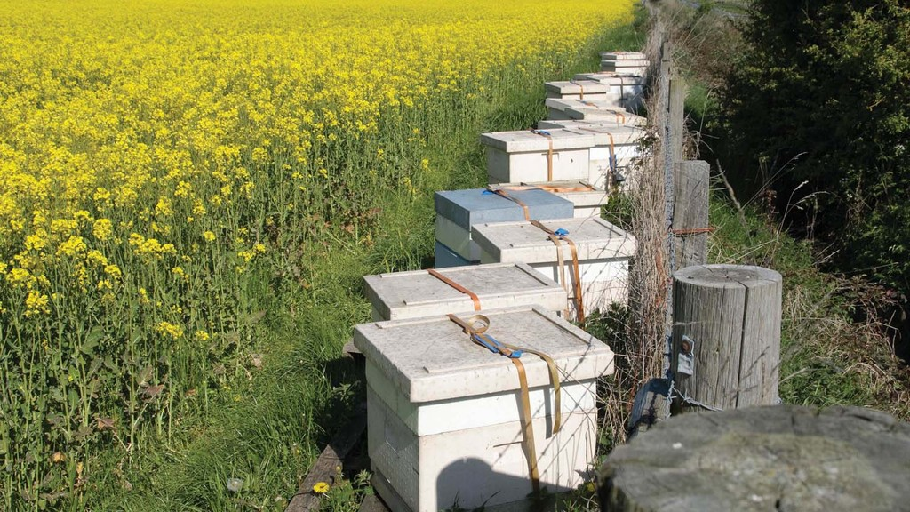 UK neonicotinoid field trials slammed