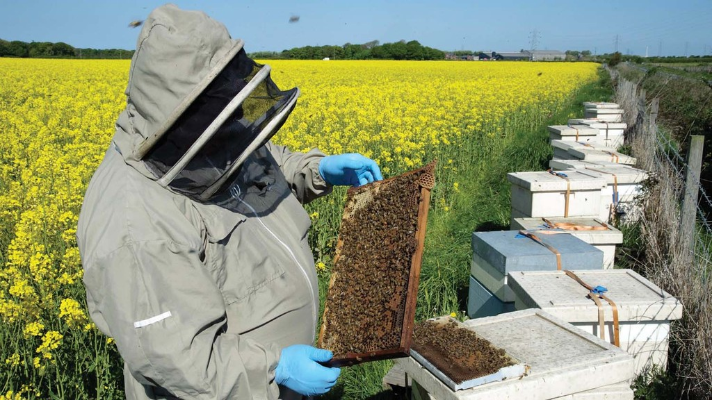 Eustice rejects second NFU neonicotinoid emergency use application