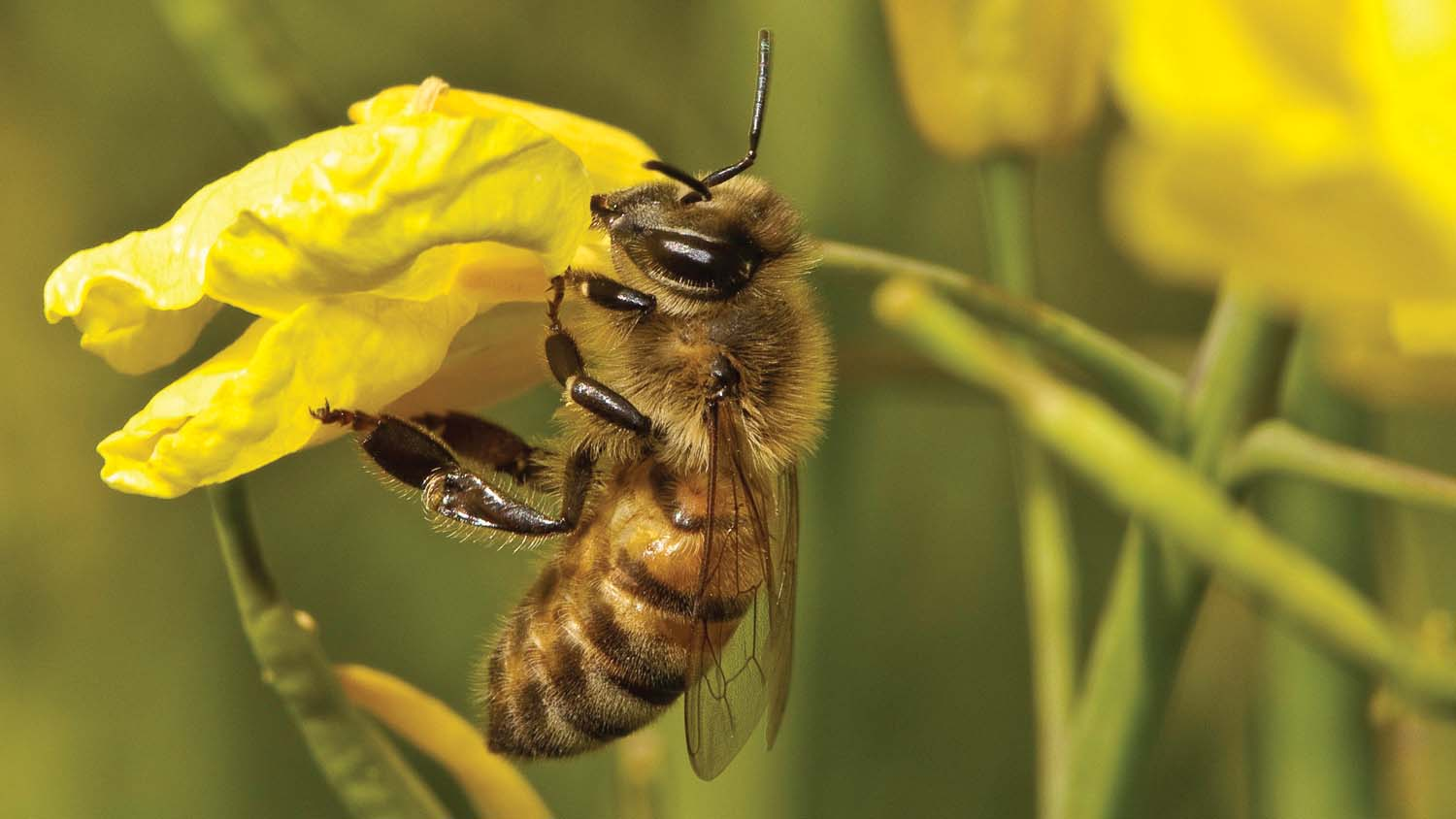 Neonics risk to bees confirmed says EFSA