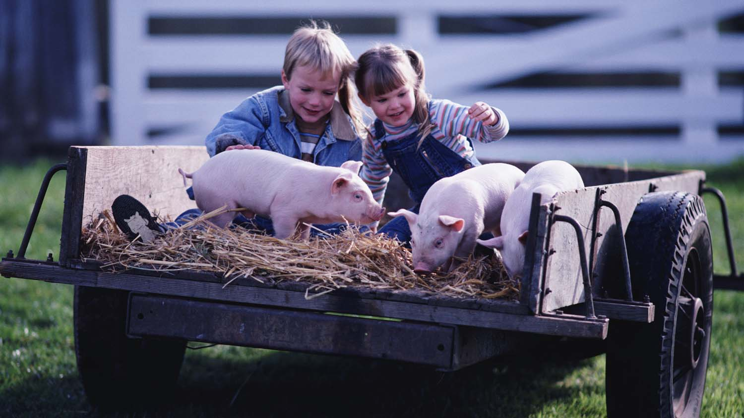 One sixth of 5-7 year-olds thought bacon was the produce of cows, sheep or chickens.