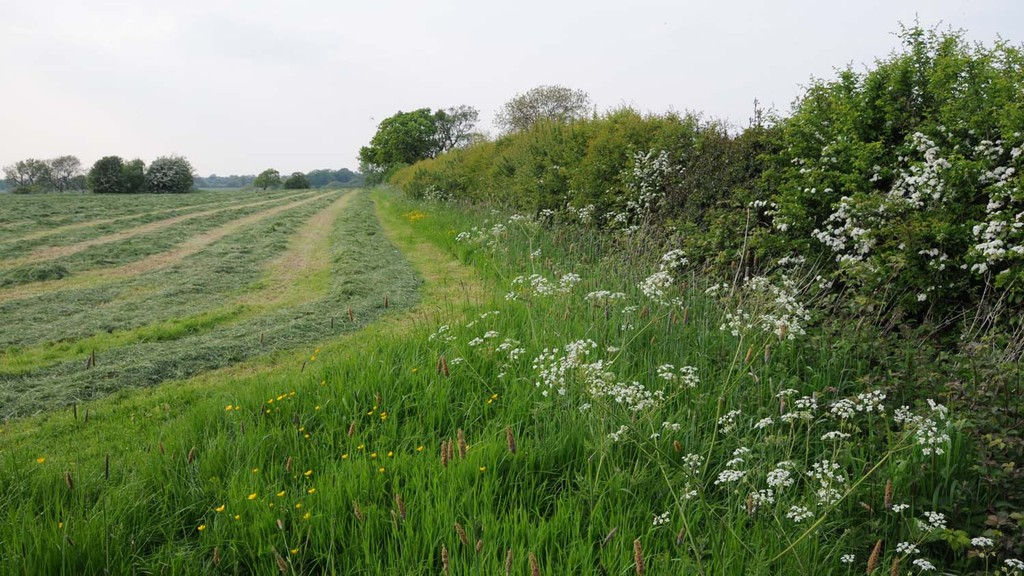 Deadline approaching for countryside stewardship hedgerow grant