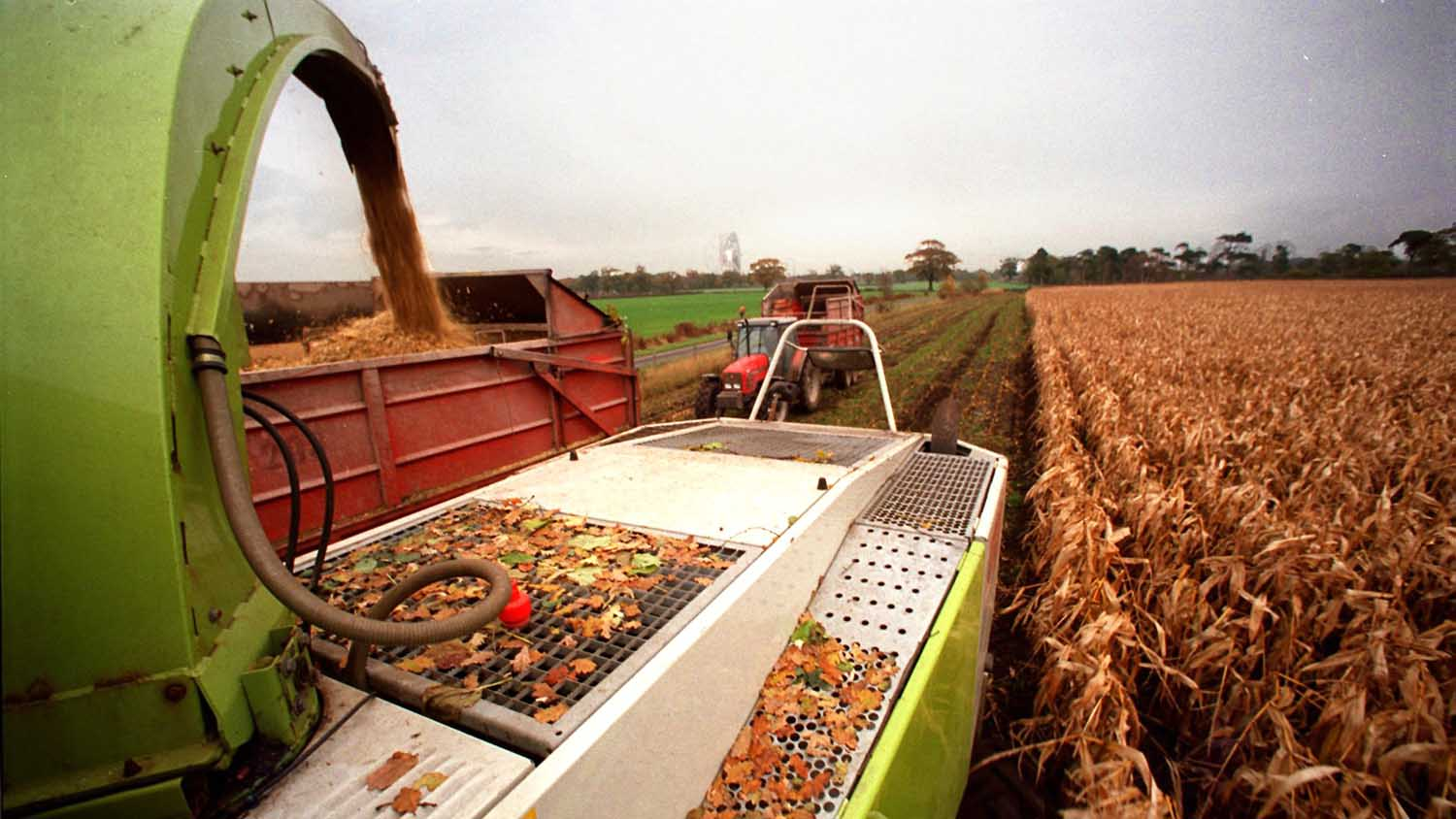 Maize Matters 2014: Make timely decisions on crop management