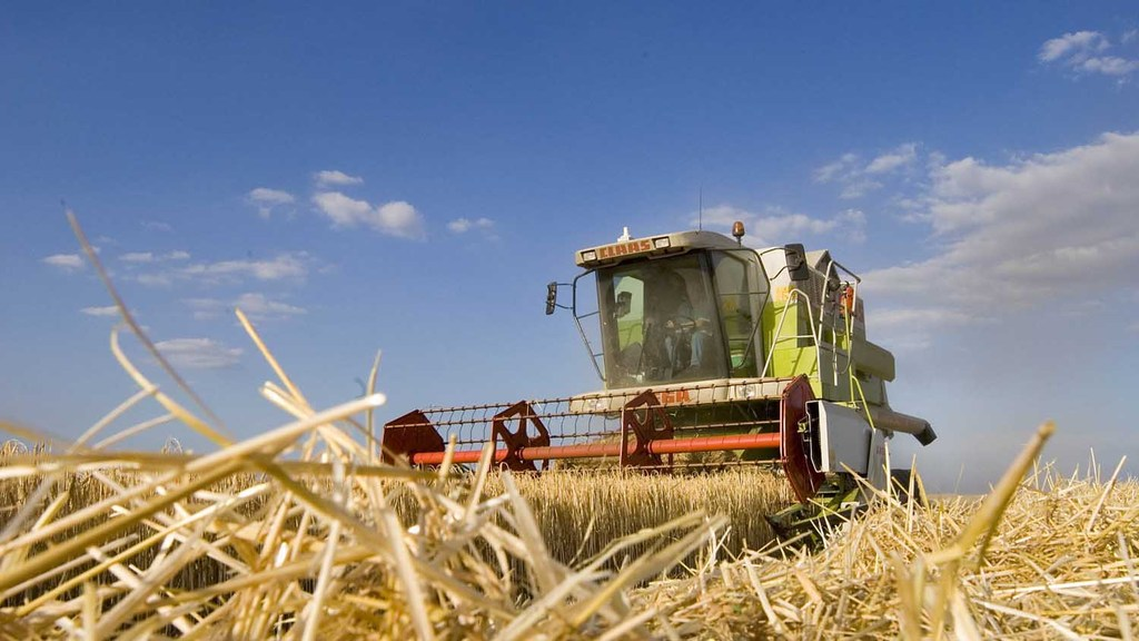 Sterling strength stunts UK arable exports as harvest continues