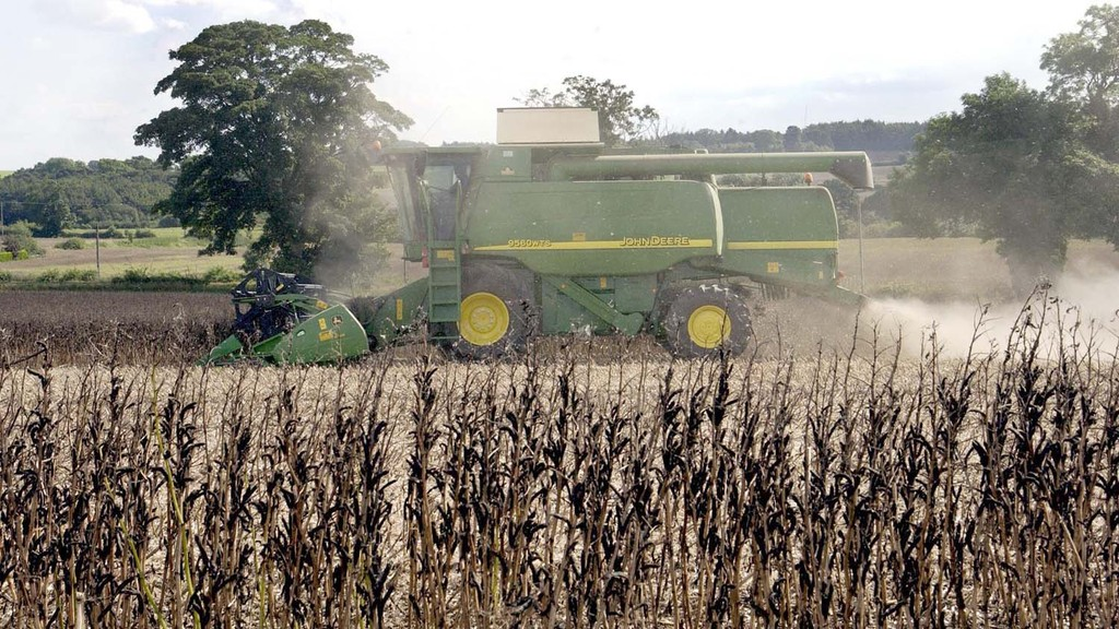 Field bean harvest still not complete in the North