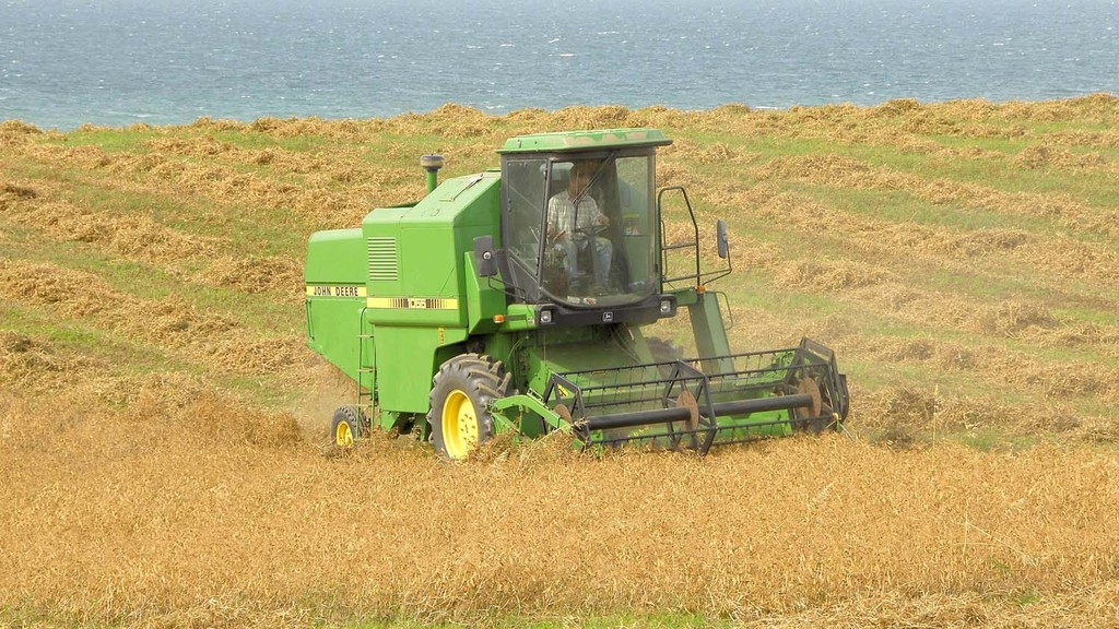 Growers advised to avoid pea harvesting delays to maximise quality