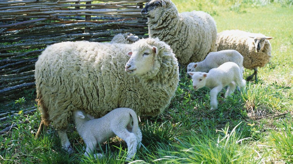 Handy hints: Top 10 tips to help keep lambs alive