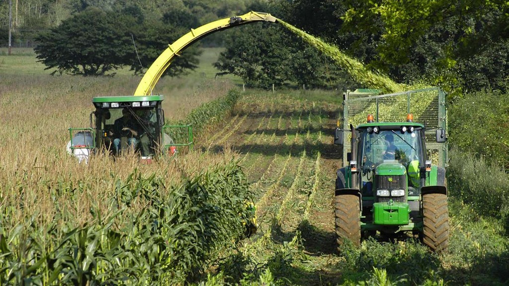Initial maize harvest good but expect issues with late crops