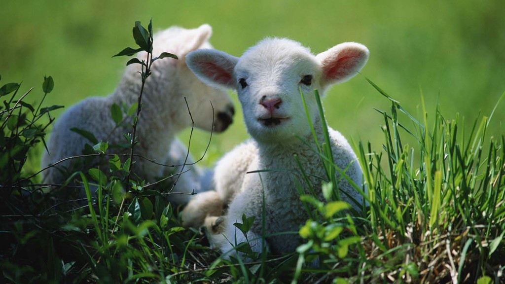 Farmers have been encouraged to submit suspected lambs for post-mortem.