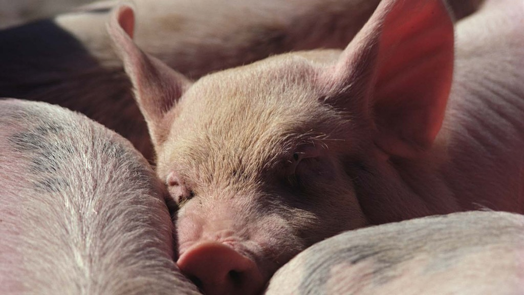 The UK pig sector recently launched a new antibiotic stewardship programme