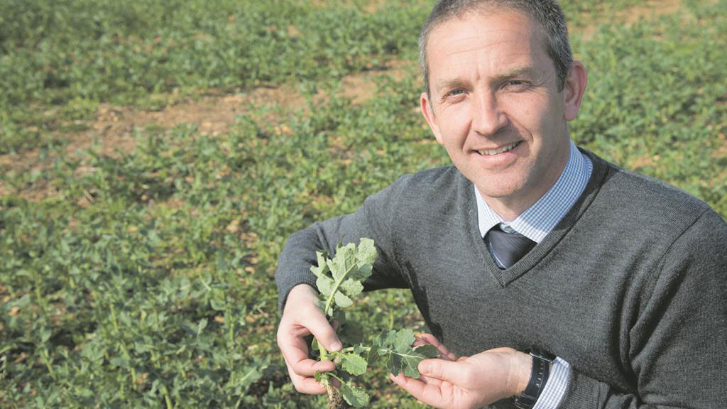 Plots demonstrate growing oilseed rape without neonicotinoids