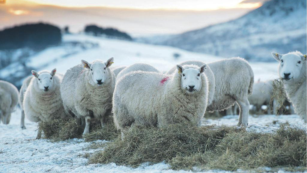 Defra snow fund to pay 90 per cent sheep removal cost