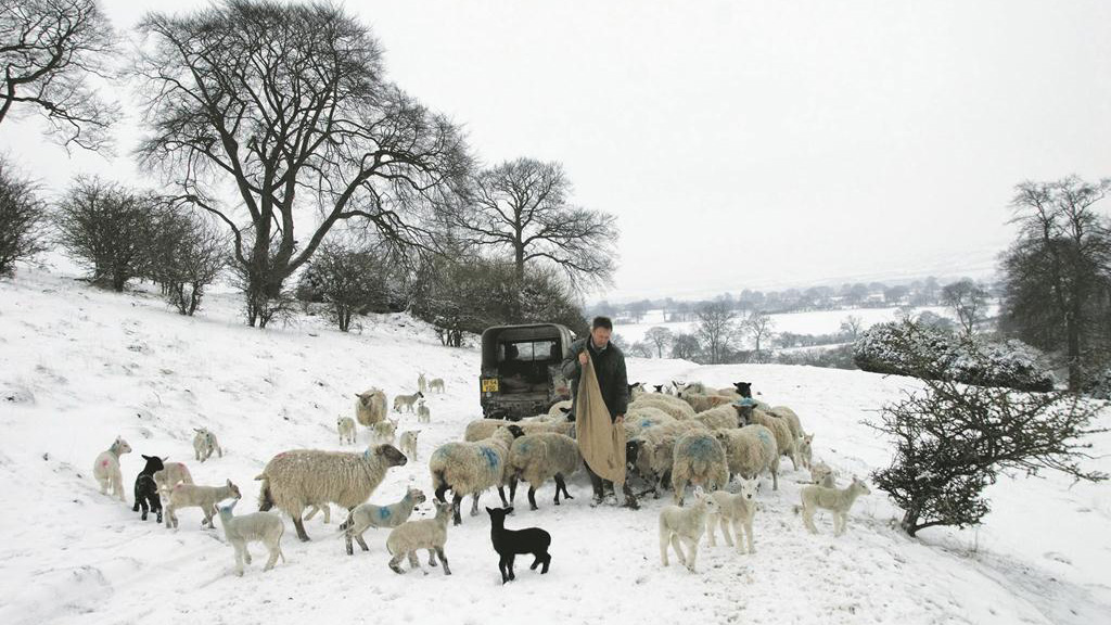 Spring snow wreaks havoc on UK farms